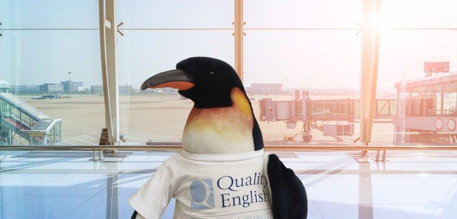 Quentin the Quality English penguin at the airport
